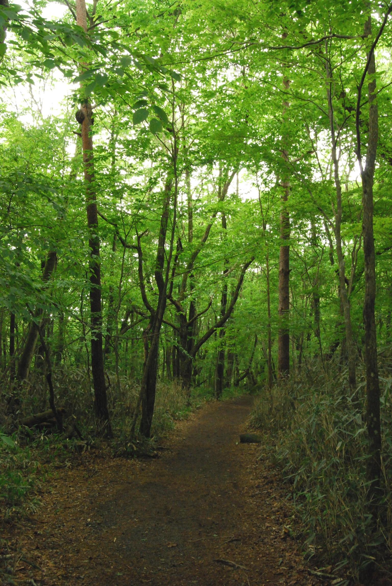 Forest by Nishizawa Valley, Yamanashi